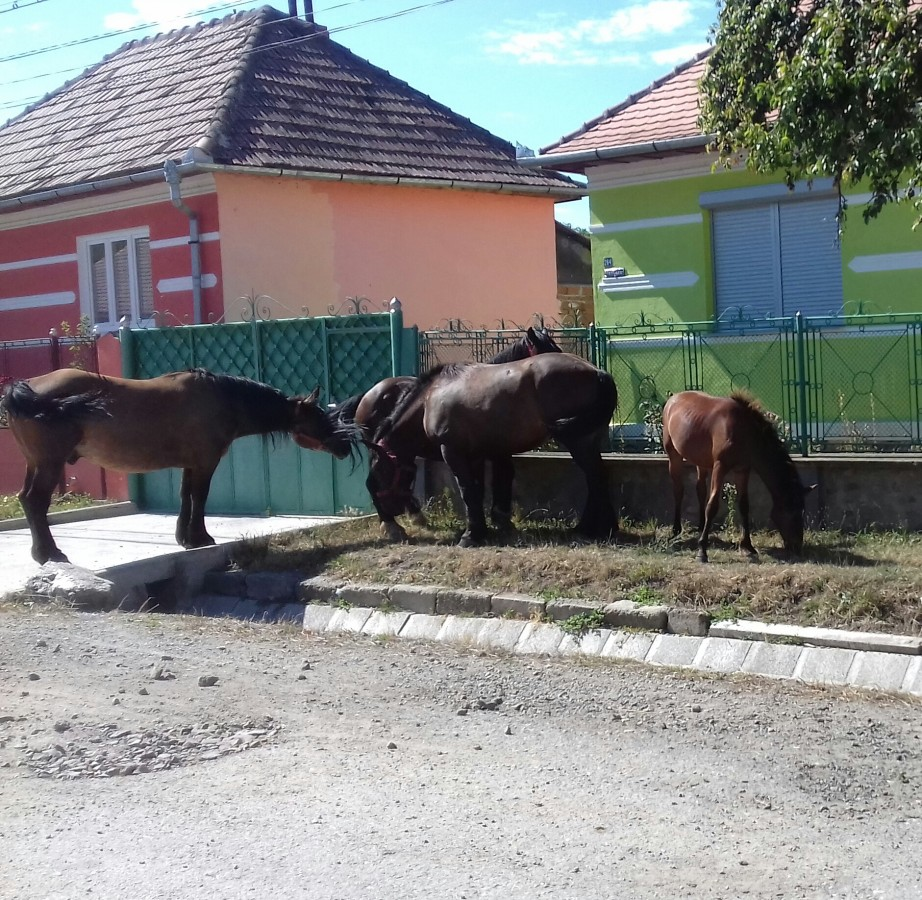Satul unde o mână de oameni fac legea. Primarul cere ajutor de la București