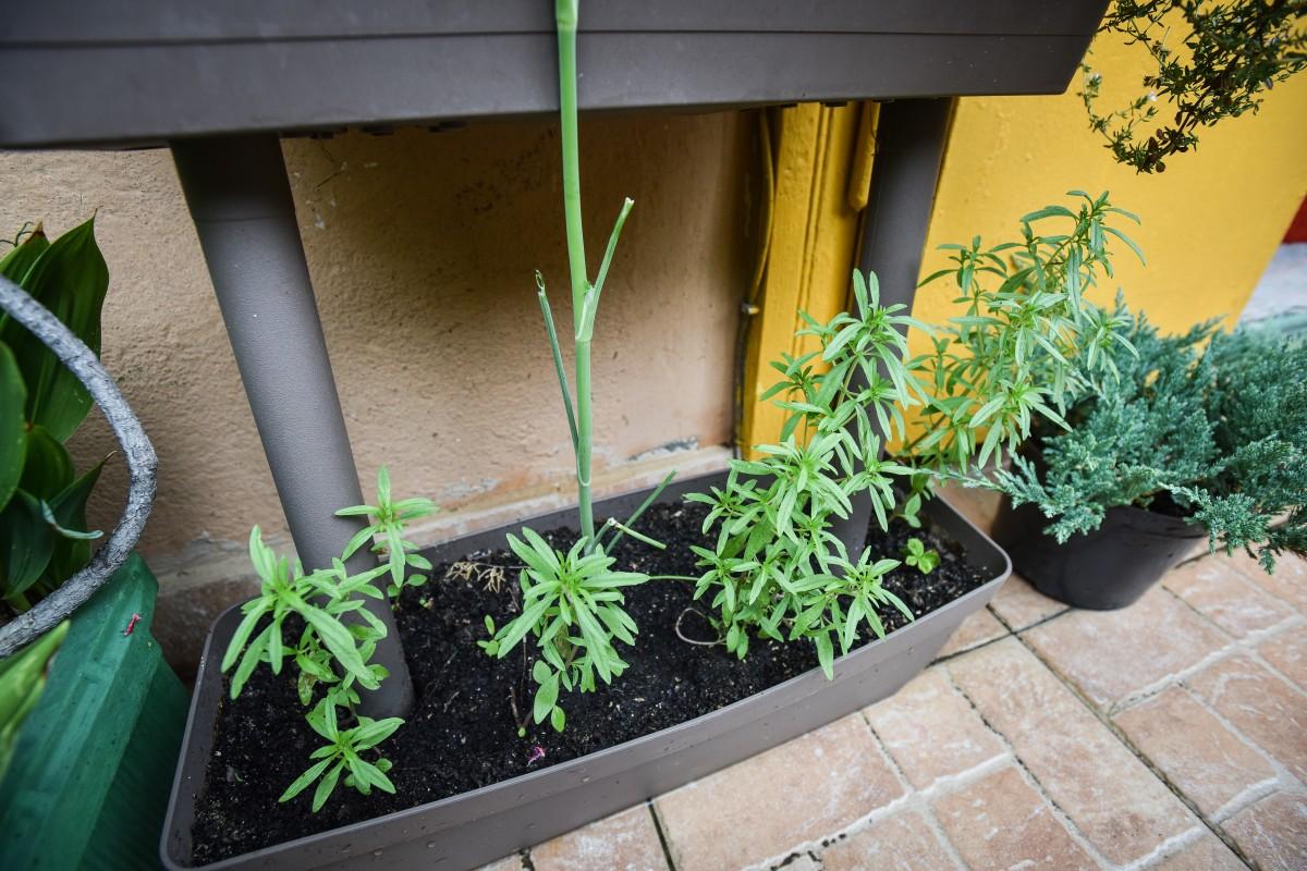 """Grădina din balcon, o necesitate. """"Cu cât timpul între cules și mâncat este mai mic, cu atât beneficiile sunt mai mari"""""""