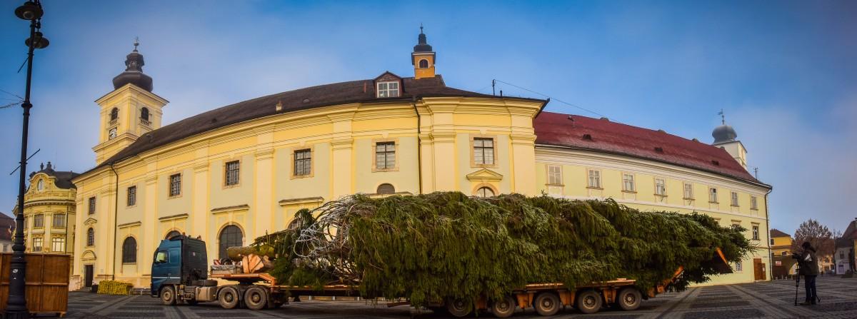Bradul de Crăciun a fost adus în Piața Mare