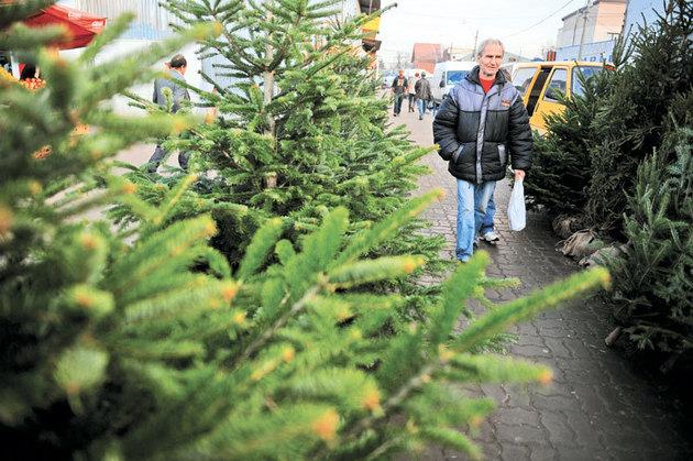 Scutul Pădurii. 40 de brazi de Crăciun confiscați, amenzi de 10.000 de lei