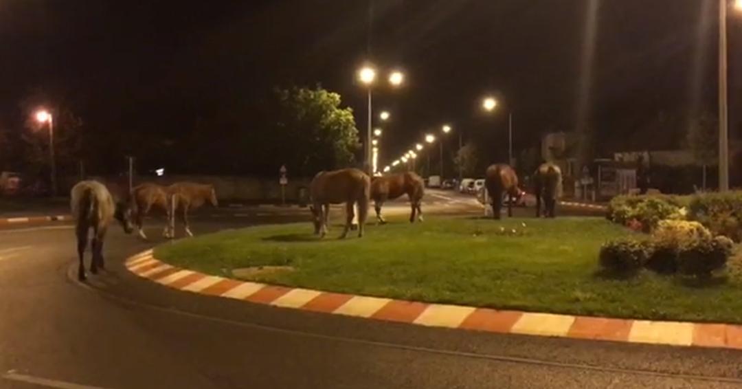 Sibiu, sat frumos! Cai la păscut în giratoriu | VIDEO