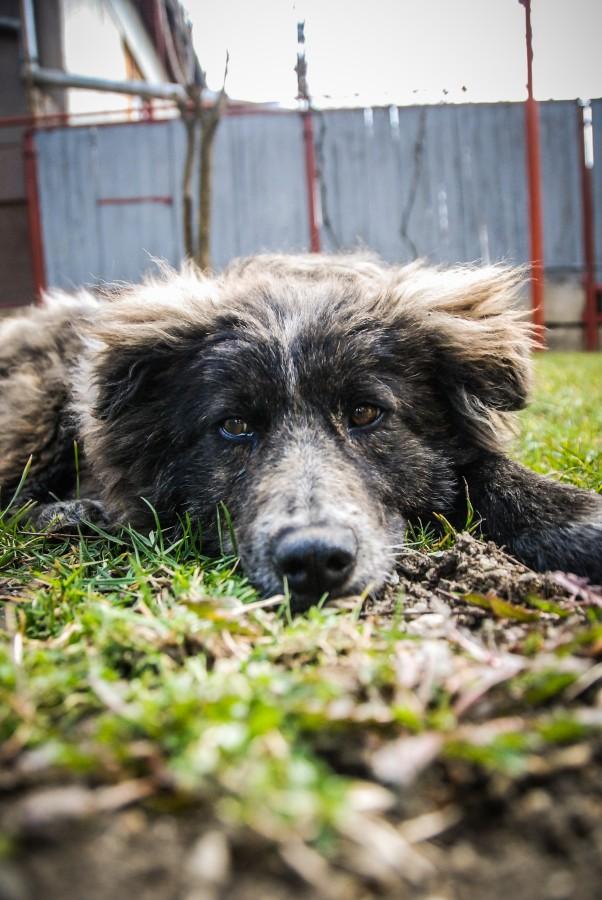 Ce soluții au găsit autoritățile pentru a proteja turiștii de câinii ciobănești și cei fără stăpân