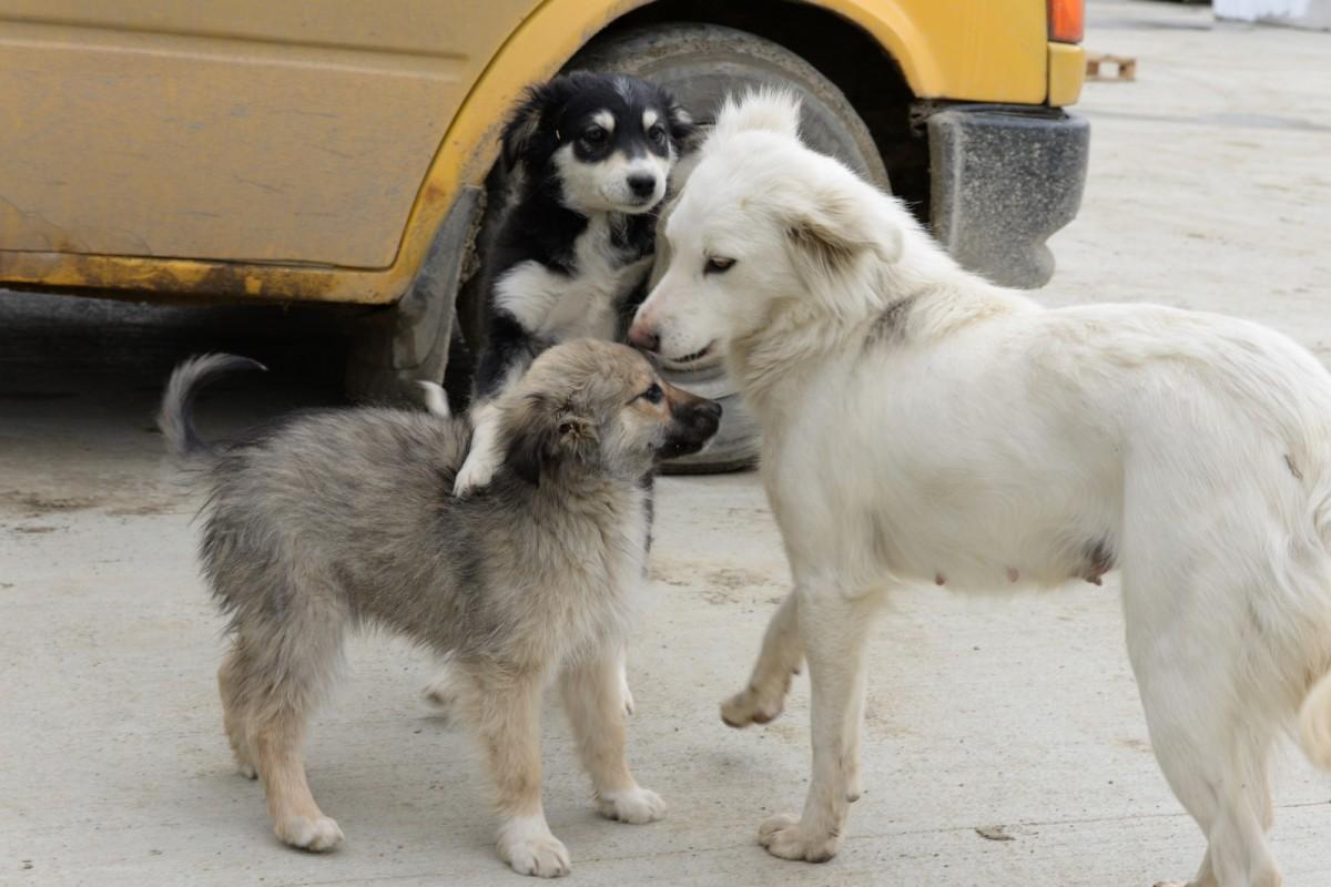 Câinii fără stăpân din Șelimbăr, duși în Cristian