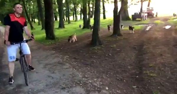 """VIDEO - Trasee de cicloturism dotate cu câini de stână. """"E cea mai mare reclamă negativă pentru Sibiu"""""""