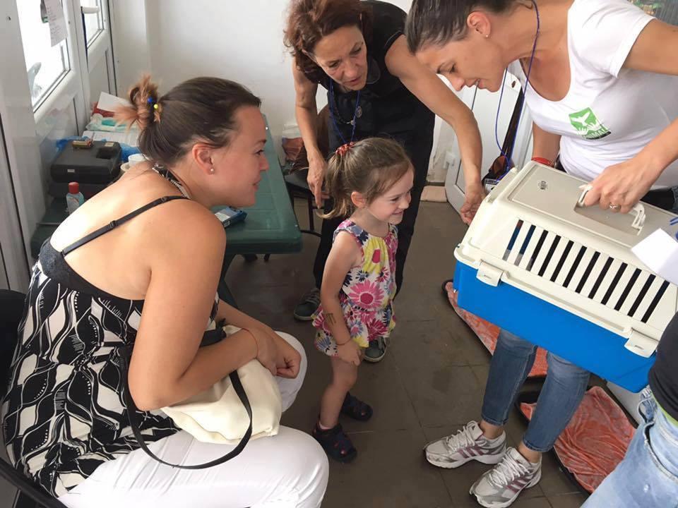Proiectele maratonului. (12) Campanie gratuită de sterilizare a câinilor și pisicilor