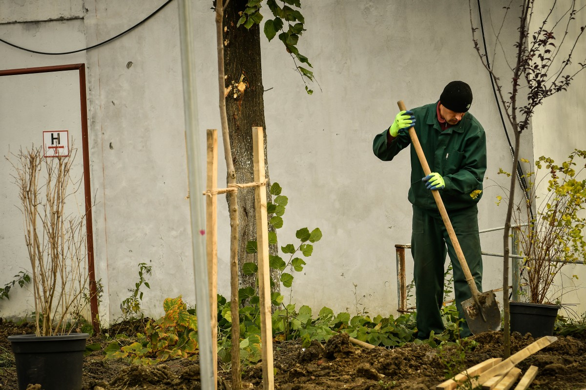 Primăria plantează arbori și arbuști ornamentali, în cadrul campaniei de toamnă