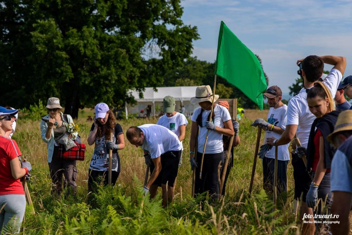 60 de voluntari au îngrijit 10.000 de puieți, la Arpașu de Jos