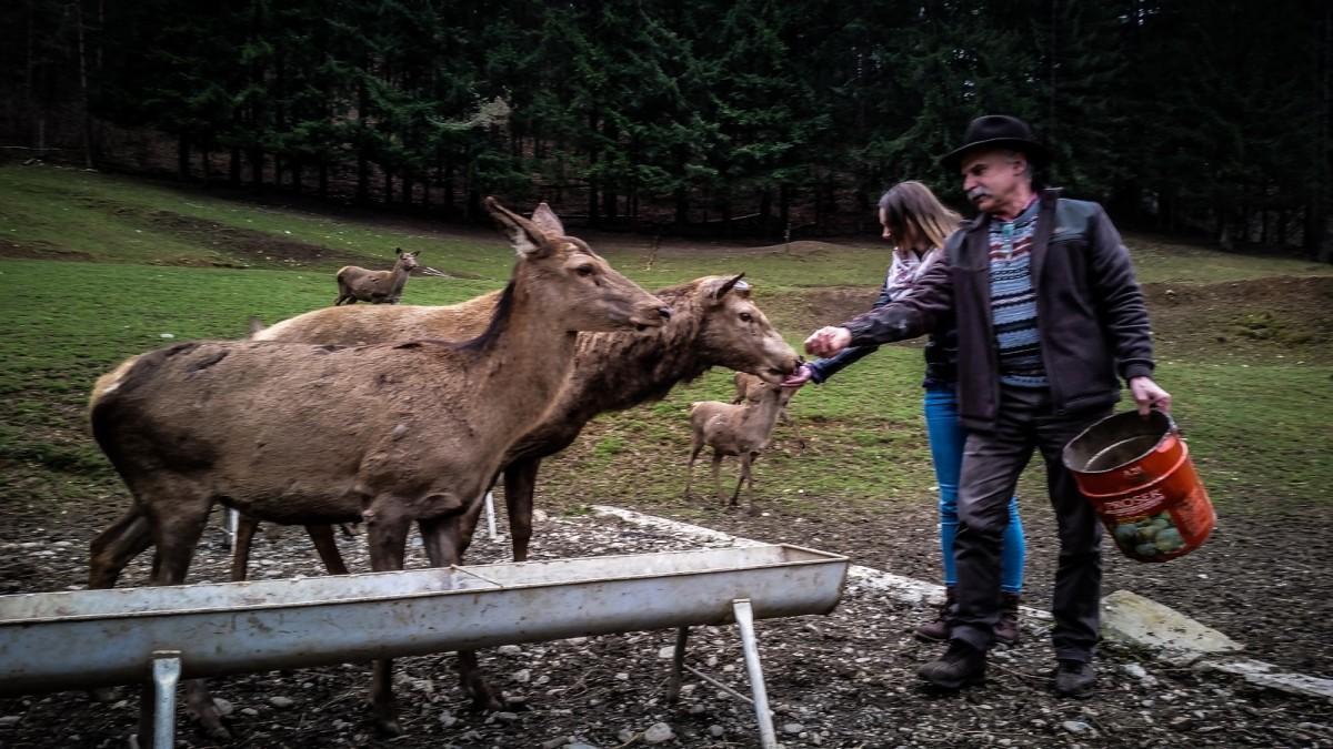 """În județul Sibiu există prima fermă de cerbi din țară. """"Duminica, aici e ca la mănăstire"""""""