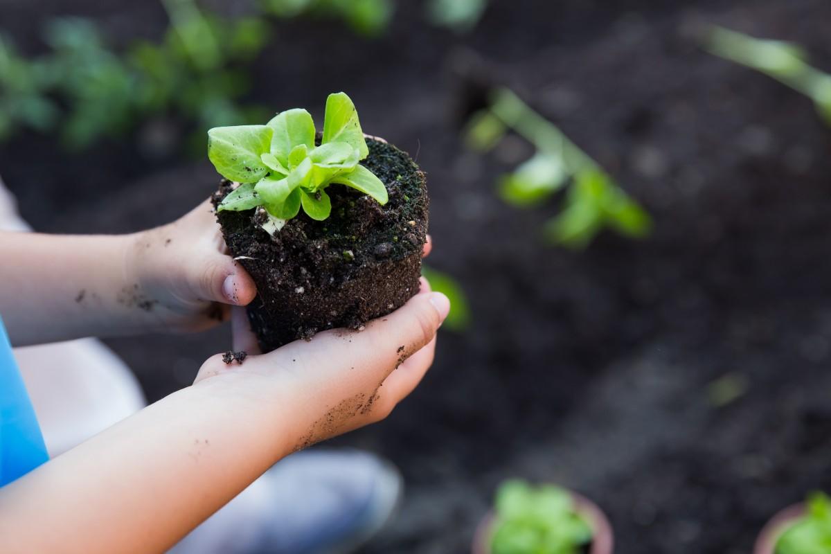 """Operațiunea """"Grădina din grădiniță"""" a fost lansată. S-au construit primele trei grădini de legume în grădinițele din Sibiu"""