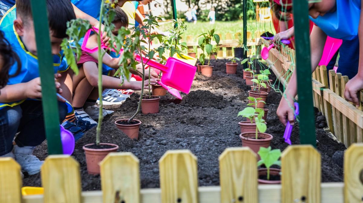 Grădinile din grădiniță, pregătite pentru rod