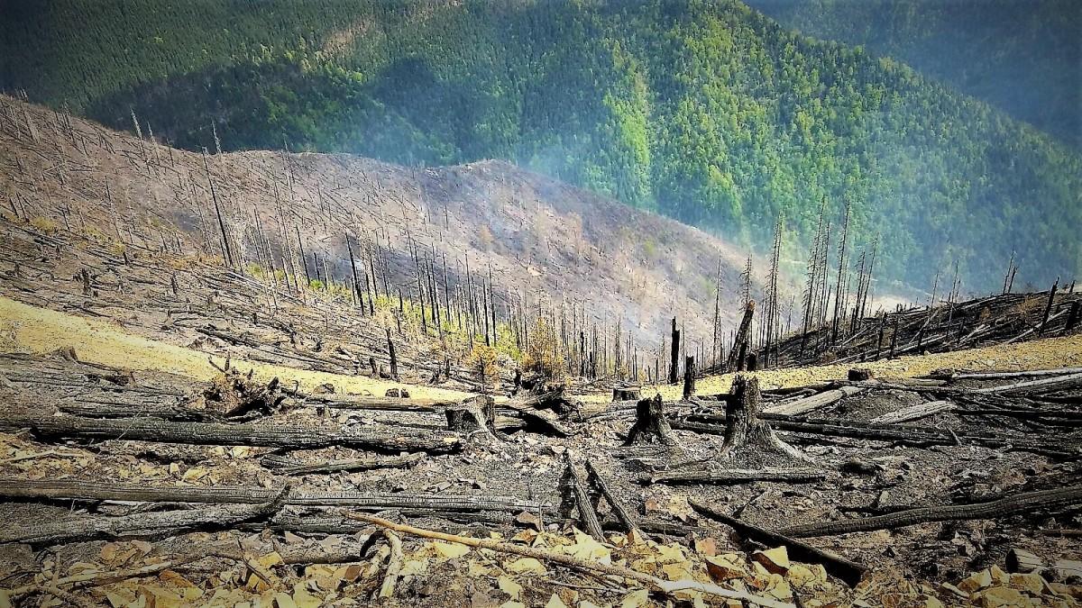 A scăzut numărul incendiilor din pădurile Romsilva