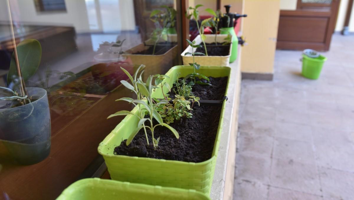 Cum plantezi o grădină la oraș?