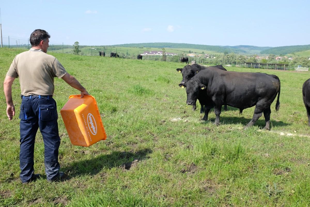 Cea mai mare fermă din județul Sibiu vândută pentru 6 mil. de euro. Continuă investițiile în dezvoltare