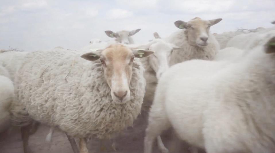 Proiectele maratonului. (2) Unelte pentru prelucrarea lânii
