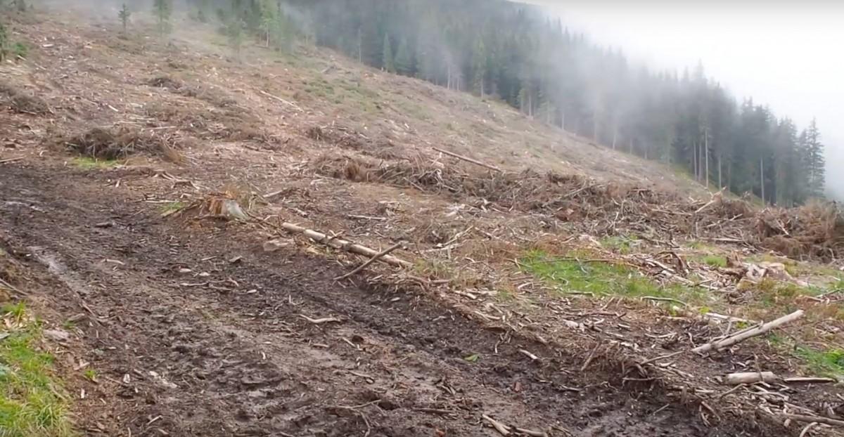 VIDEO-Activiști: Pădure cvasivirgină din județul Sibiu, rasă de pe fața pământului. Poziția ROMSILVA