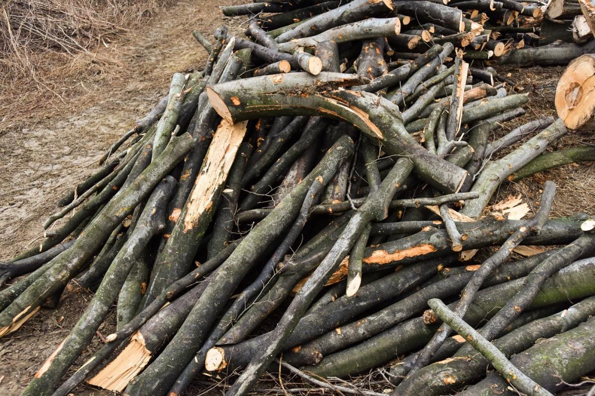Cinci bărbați care transportau lemn furat au primit 25.000 de lei amendă