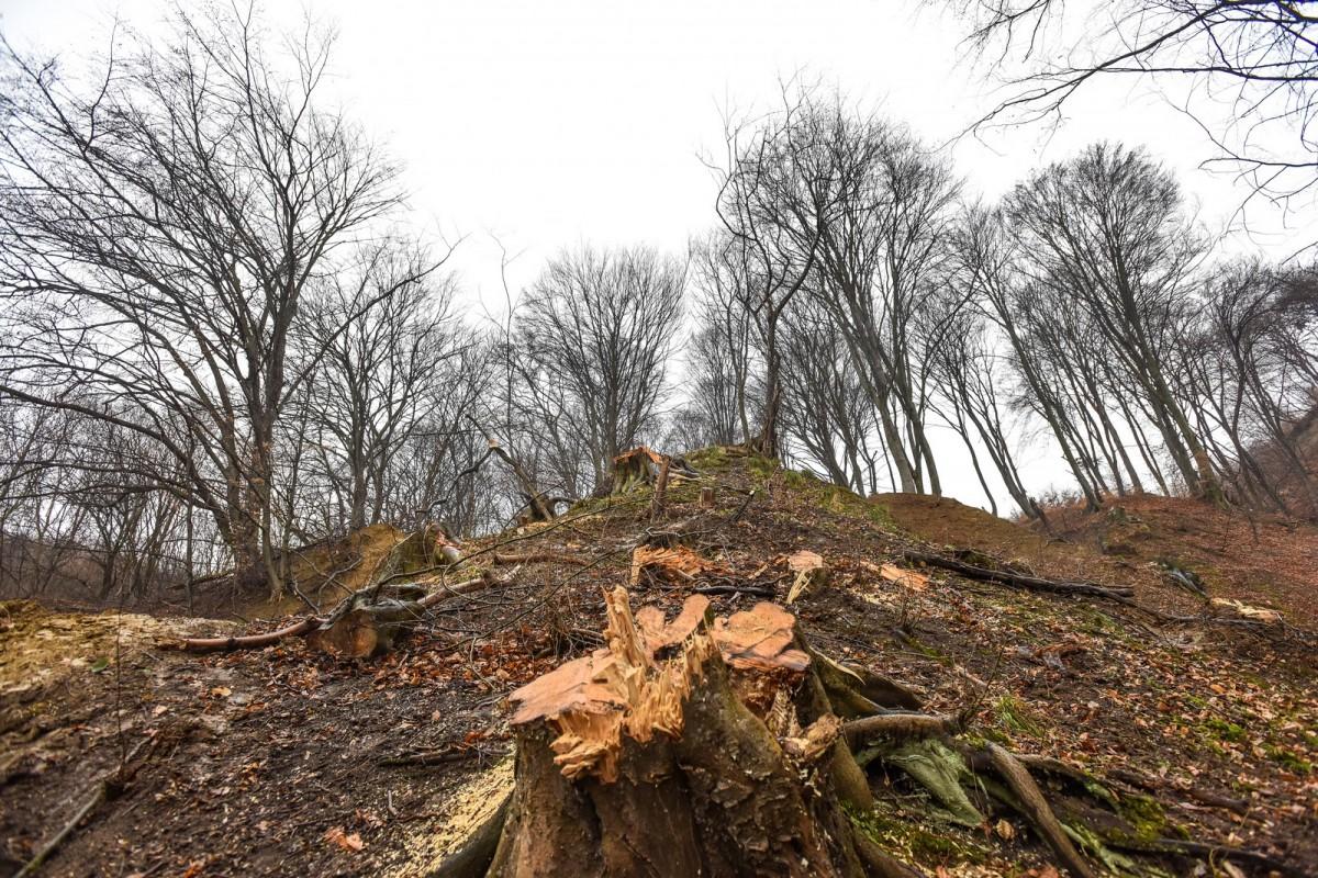 Doi bărbați au tăiat o pădurice de stejari. Amendă de8.000 de lei, fiecare
