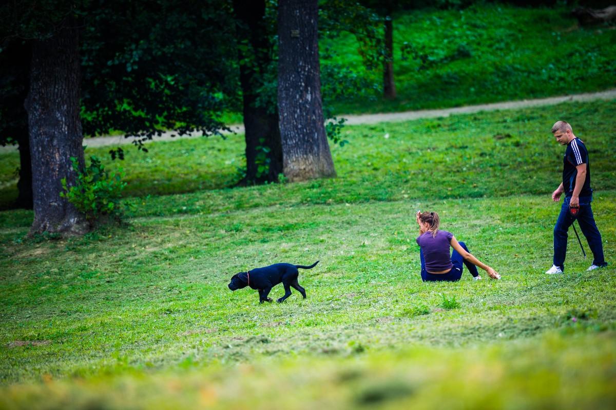 Primăria interzice efectivplimbatul câinilor fără lesă în Sibiu