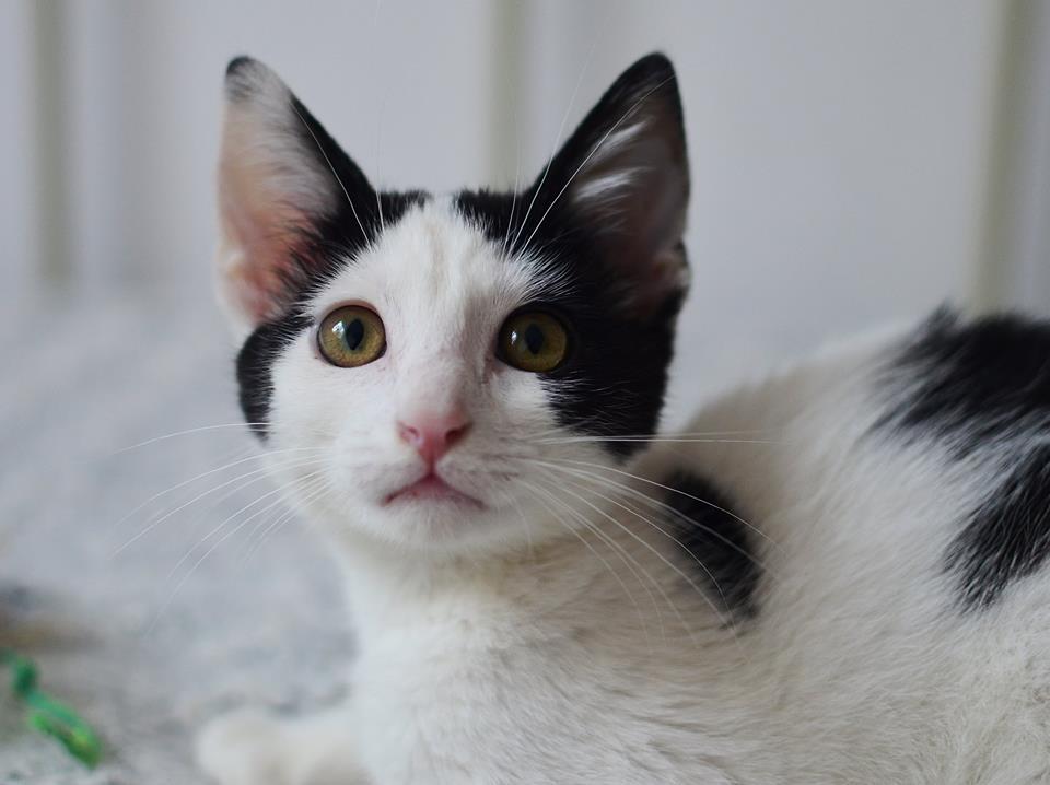Animal Life caută chirie pentru pisicuțele asociației