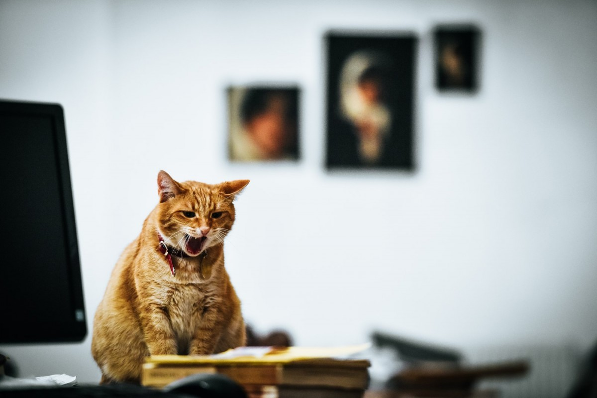 Excelente expoziții și o pisică mare grasă! Foto/Video