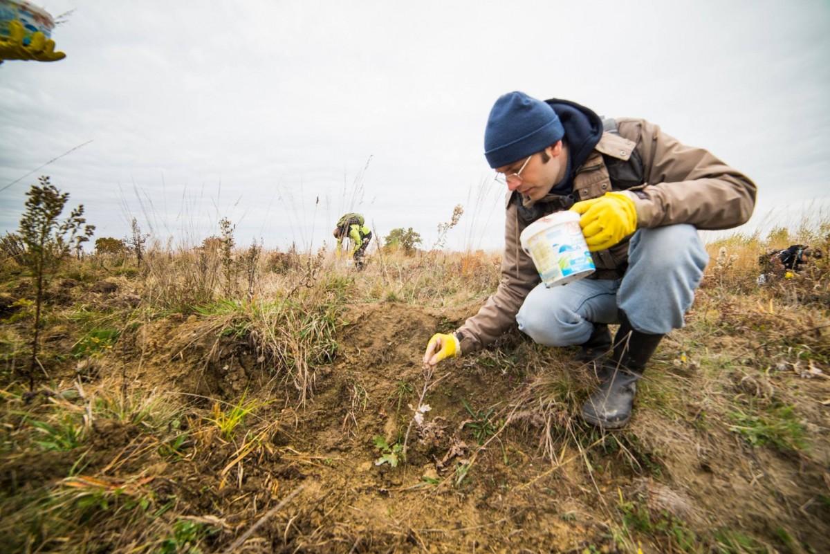 Se caută voluntari pentru plantarea a 2300 de puieți în pădurea din Arpașu