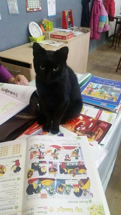 Foto | Sally, pisicuța care merge la școală, își caută stăpân