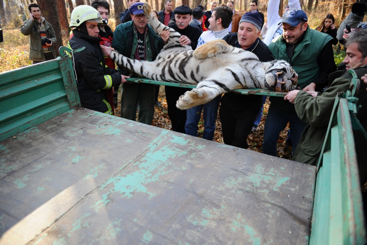 """Președintele Iohannis vs. primarul Iohannis. Concluziile """"Operațiunii Tigrul"""" din 2011"""
