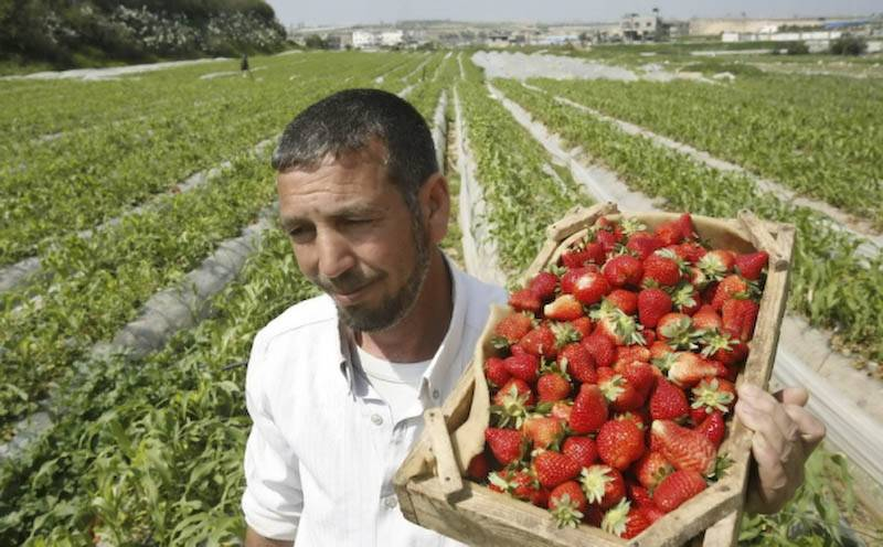 Locuri de muncă la cules căpșuni în Danemarca
