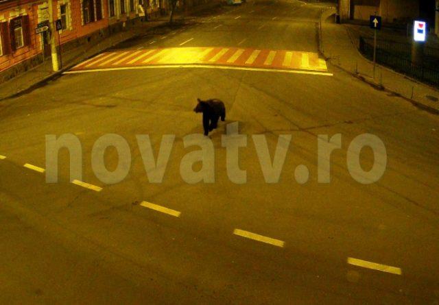 VIDEO. Imagini de pe camerele de supraveghere cu ursul din Mediaș