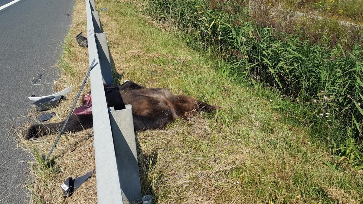 """Autoritățile au găsit soluția: Indicatoare cu """"Atenție animale"""" pe autostradă"""