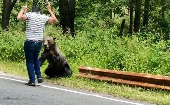 VIDEO-Bărbat aproape mușcat și doborât de un urs, pe Transfăgărășan