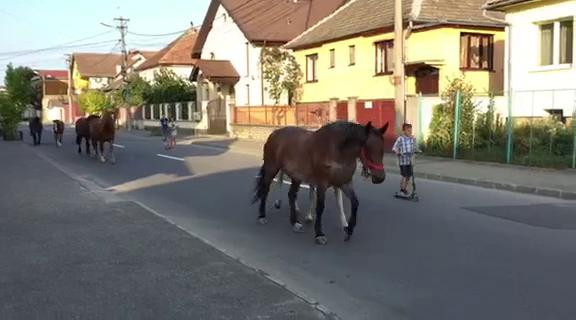 Sibiu, sat frumos! Cai la plimbare prin cartierul Ștrand