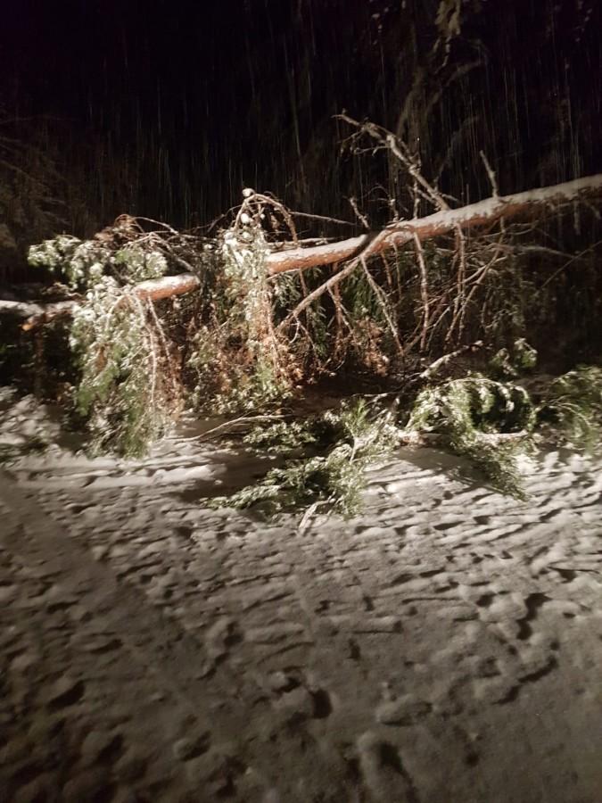 Copacii vor continua să cadă pe șosea, pe Valea Oltului. Trei ministere au căzut de acord cu asta
