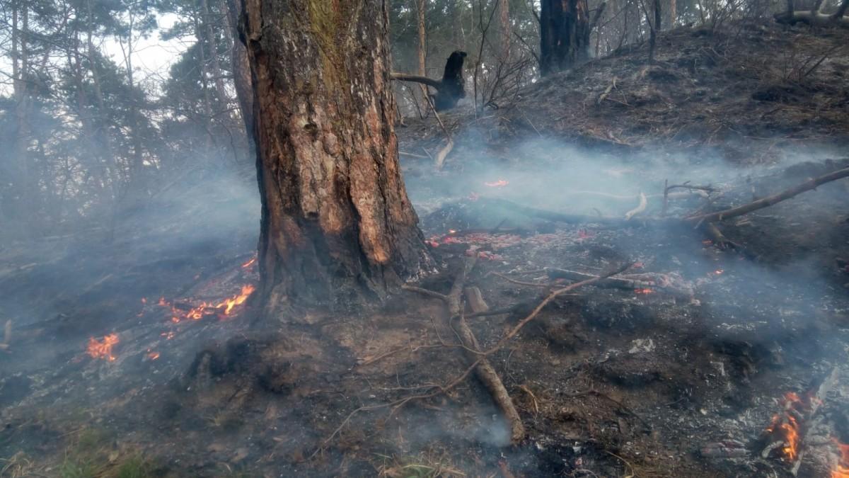 Incendiu la Mălâncrav, stins după două zile. Au ars 12 hectare de litieră și coronament