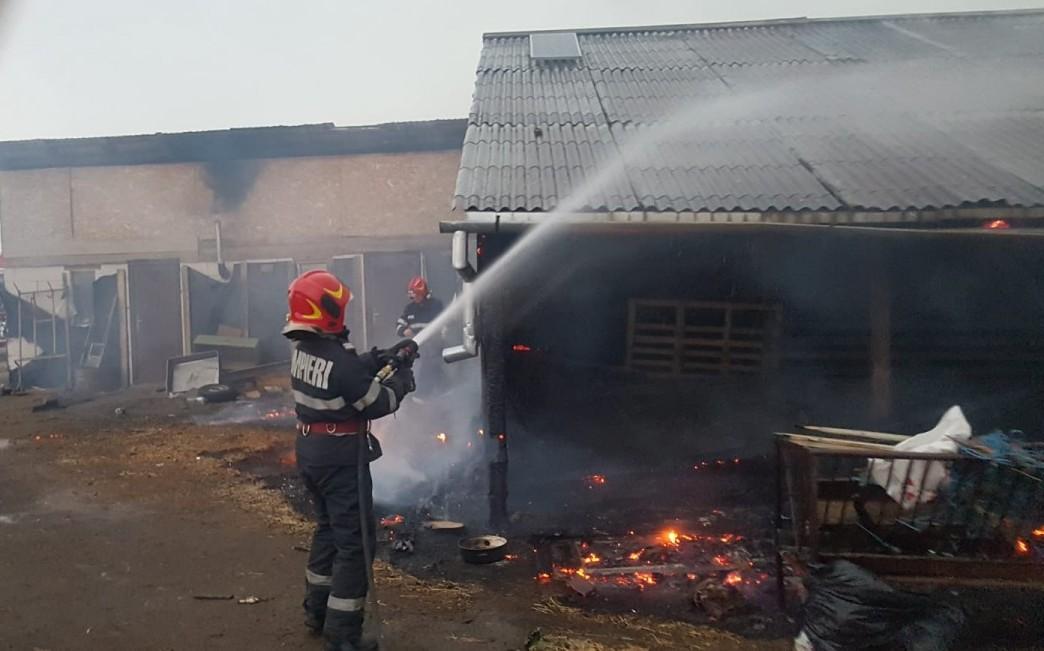Incendiu la un adăpost de animale din Ocna. Din fericire, niciun animal nu a murit