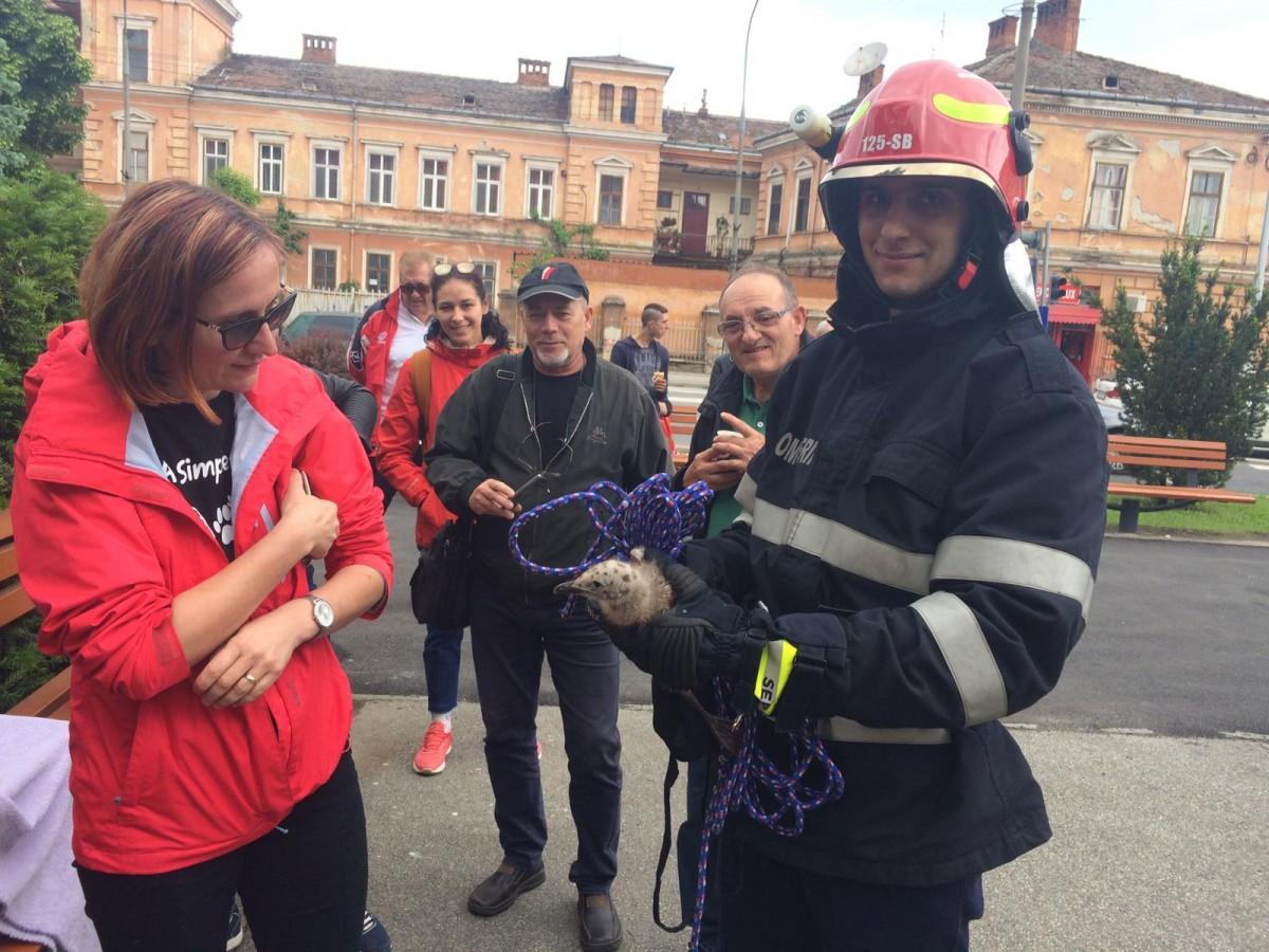 Misiune neobișnuită a pompierilor: Au salvat pui de pescăruși de pe fosta primărie