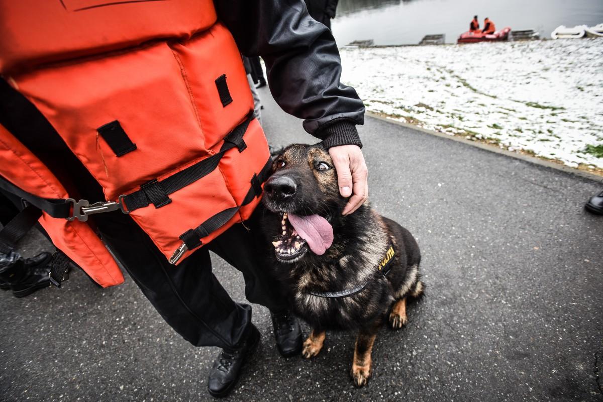 Nom, cel mai special patruped polițist al României, s-a retras la pensie în Cisnădie