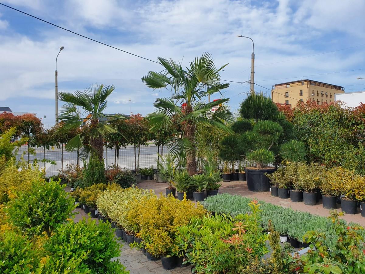 Garden Center Grădina Viselor vă așteaptă la o plimbare prin paradisul plantelor