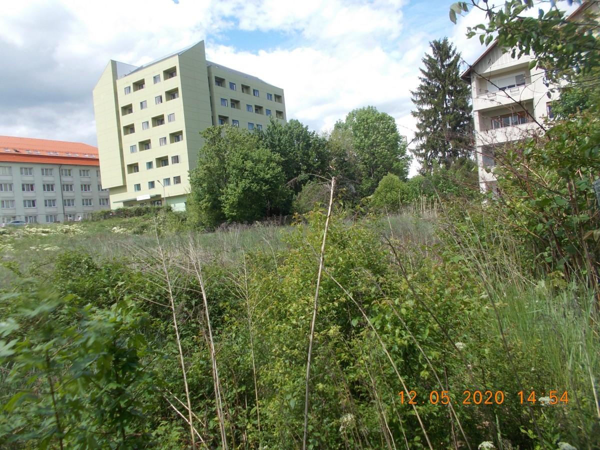 Primăria Sibiu continuă identificarea terenurilor neîngrijite din municipiul Sibiu