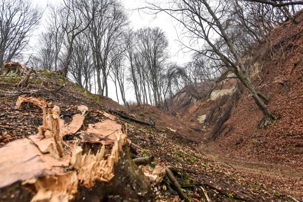Comisia Europeană cere României să combată defrișările ilegale
