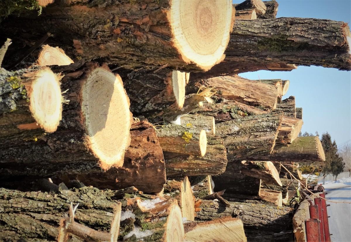 2.000 de lei amendă pentru un bărbat care transporta lemn furat