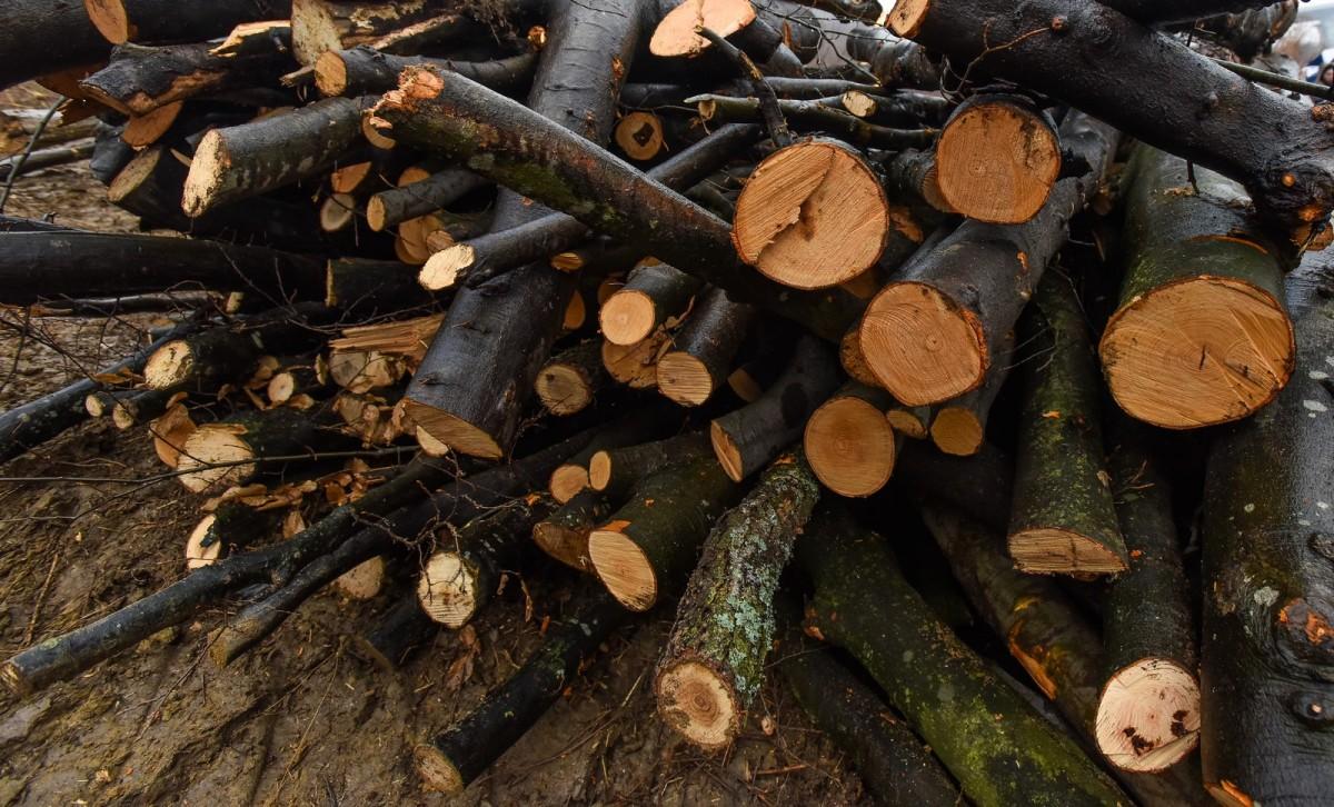 Un tânăr este cercetat penal, pentru că a fost prins tăind copaci