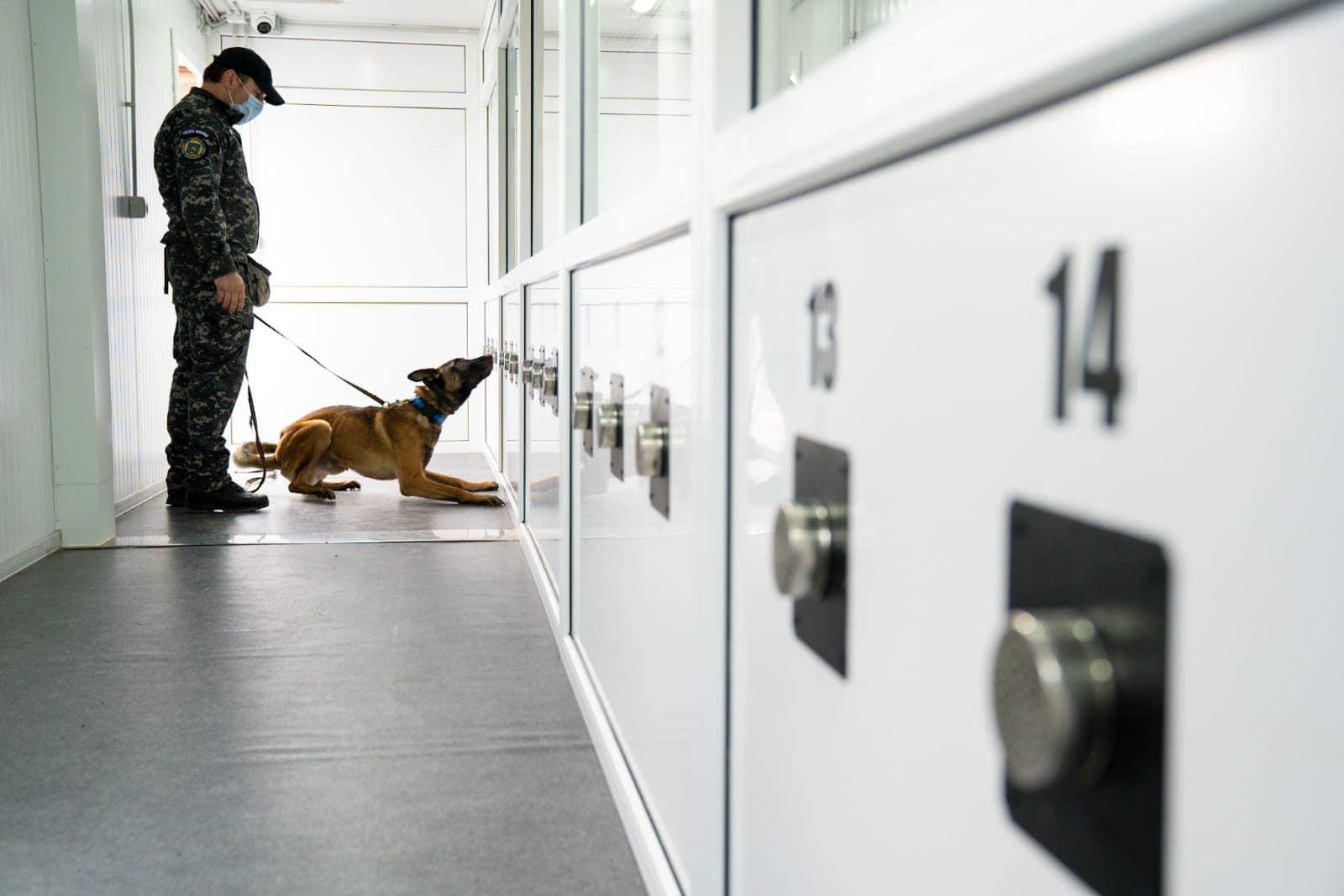 FOTO Câini antrenați la Sibiu pentru detectarea persoanelor infectate cu Covid-19