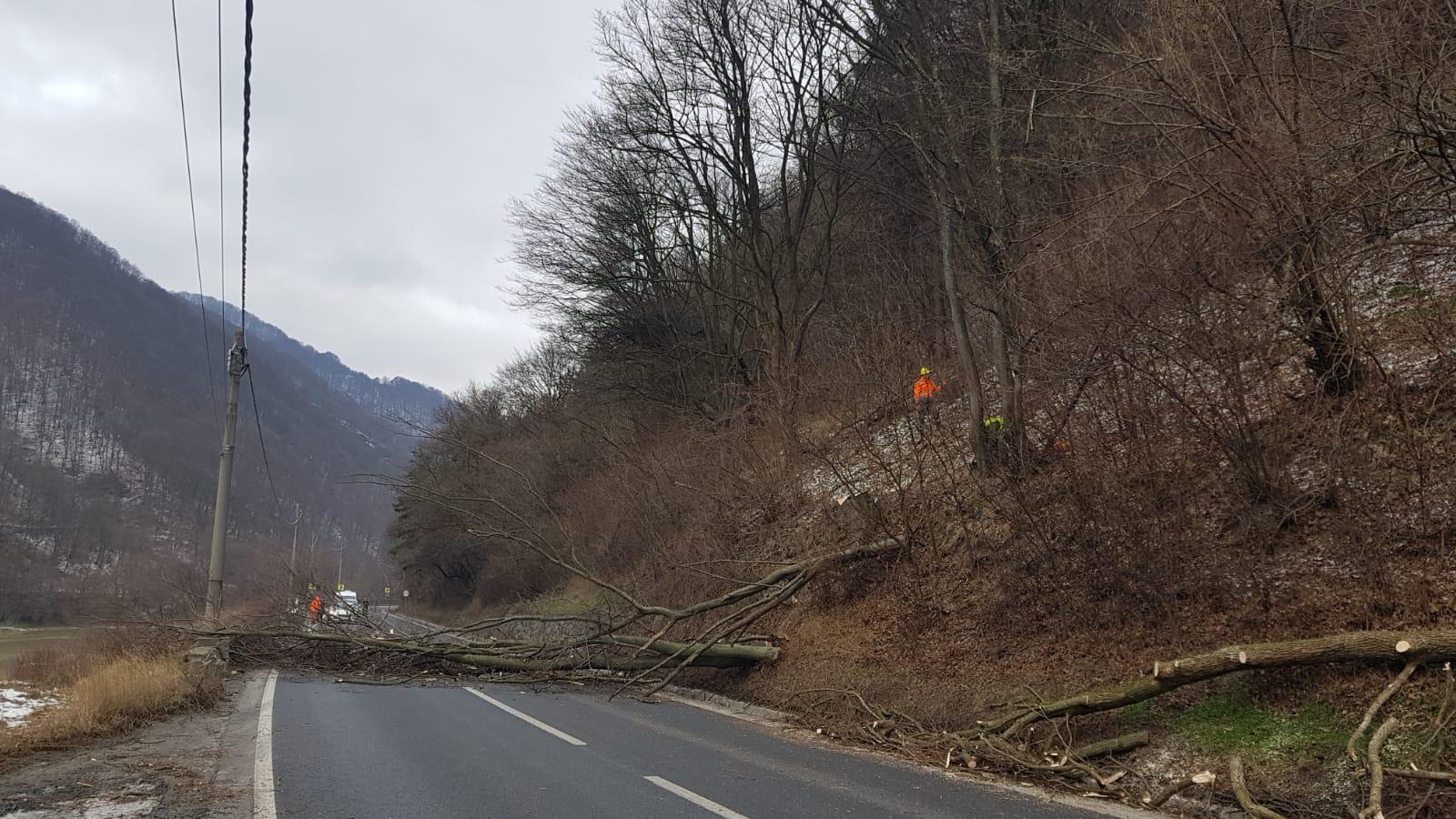 VIDEO-Restricții pe Valea Oltului pentru tăierea copacilor de pe marginea drumului