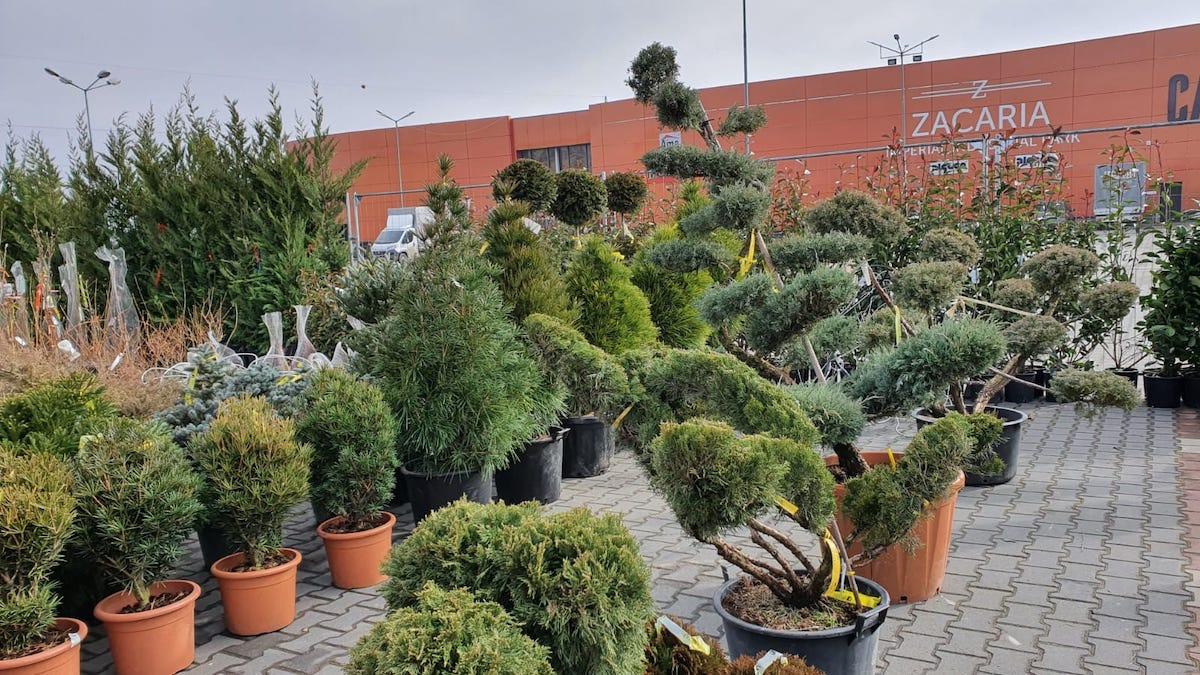 Găsește bucuria primăverii, în Garden Center - Grădina Viselor. Primele 100 de vizitatoare primesc mărțișoare handmade