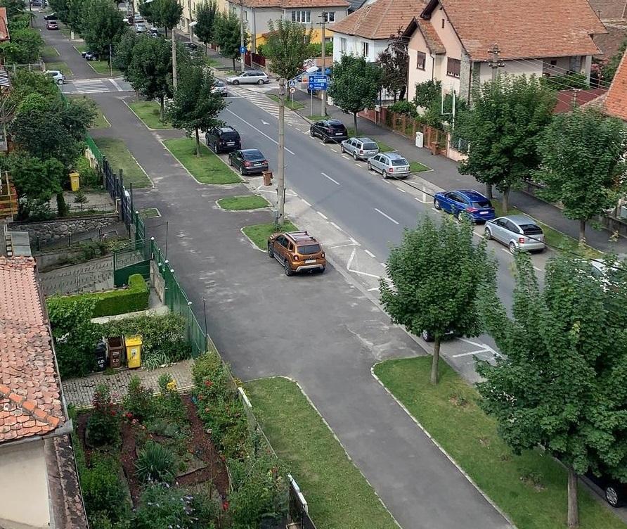 Arborii de pe Calea Dumbrăvii vor fi salvați. Prima dată când se aplică replantarea în locul defrișării