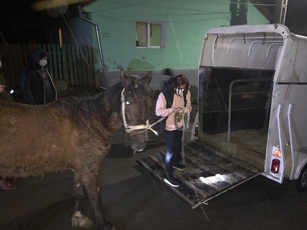 GALERIE FOTO - Primul animal chinuit salvat de Protecția Animalelor Sibiu