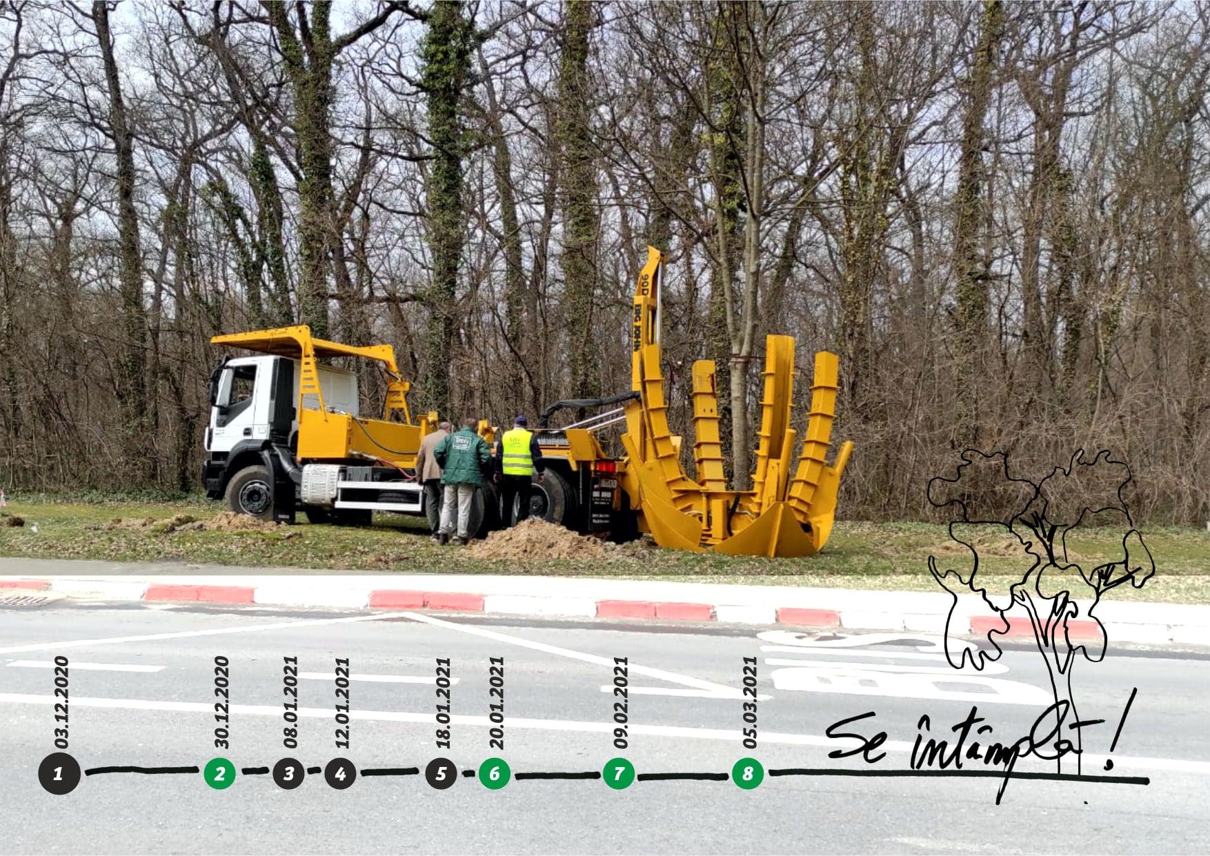 AIOS: Se întâmplă! Primăria Sibiu a început relocarea arborilor de pe Calea Dumbrării