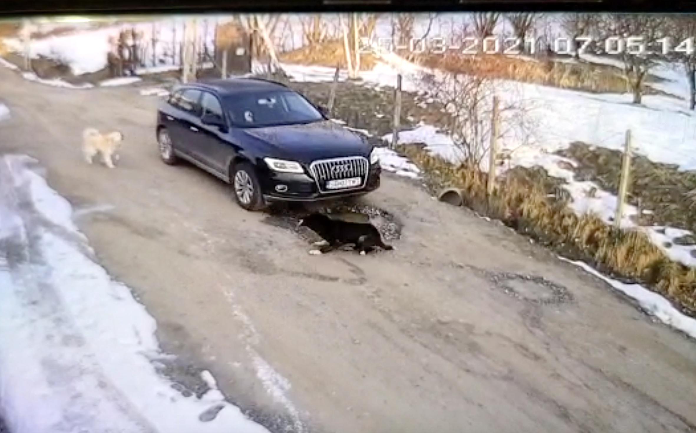 """VIDEO Câine călcat cu mașina la Cisnădioara. """"Șoferul nici măcar nu a oprit"""""""