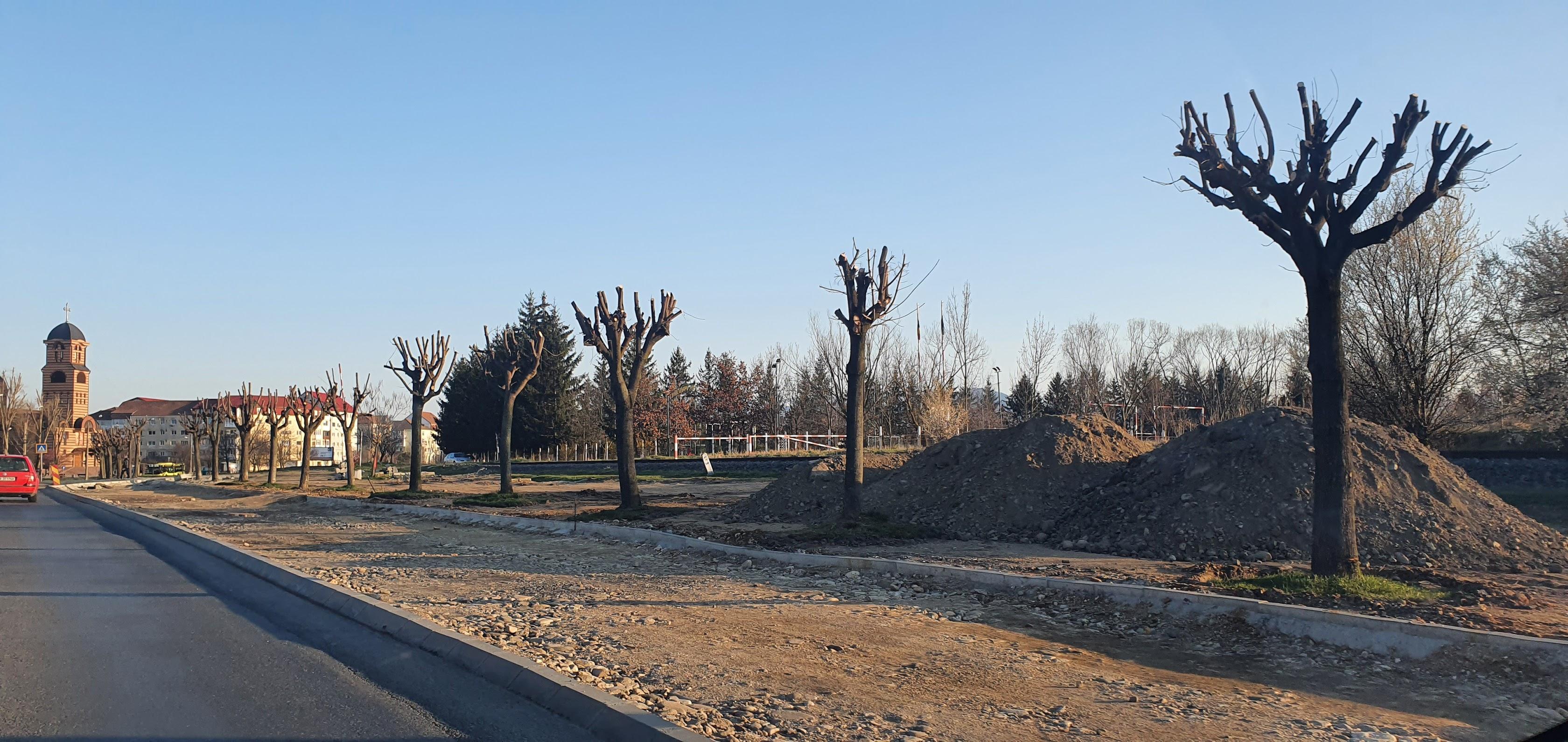 """VIDEO Cum au ajuns zeci de copaci de pe Dumbrăvii în cimitir și pe strada Maramureșului. """"Din păcate, nu avem cultura transplantării"""""""